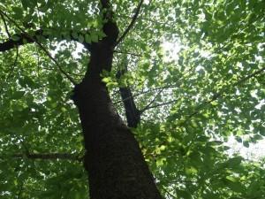 はじめまして、ハートツリーのゆみかです。