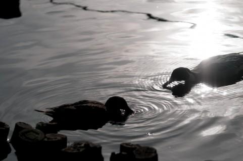恋愛(パートナーシップ)は水の温度と水量に似ている