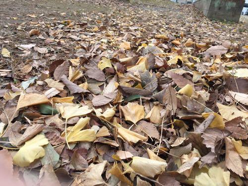 国宝聖天山 落ち葉掃きに参加してきました